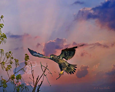 Digital Art - Immature Bald Eagle Breaks Limb by J Larry Walker