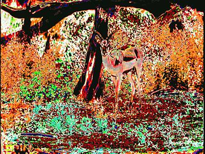 Impala In The Forest Art Print