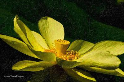 Impasto Lotus Art Print by Travis Burgess