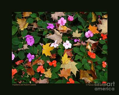 Impatiens And Autumn Leaves Art Print by Patricia Overmoyer