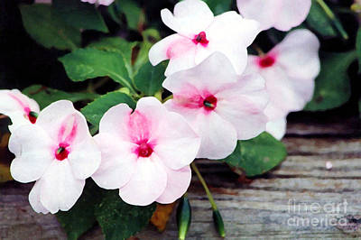 Photograph - Impatiens by Susan Stevenson