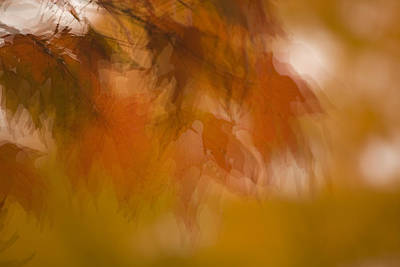 Art Print featuring the photograph Impressionistic Maple by Lisa Missenda