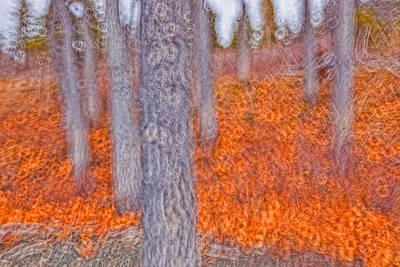 Kathleen Photograph - Impressionistic View Of Trees by Robert Postma