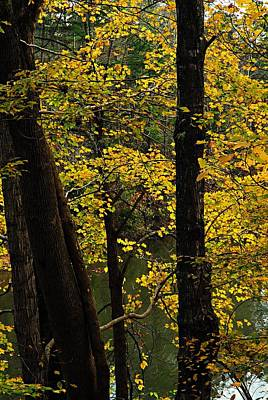 Photograph - Impressions Of Autumn 1 by Larry Ricker