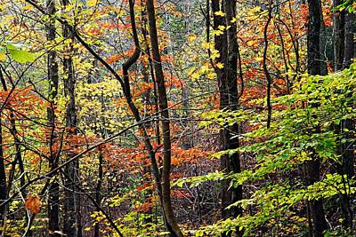 Photograph - Impressions Of Autumn 2 by Larry Ricker