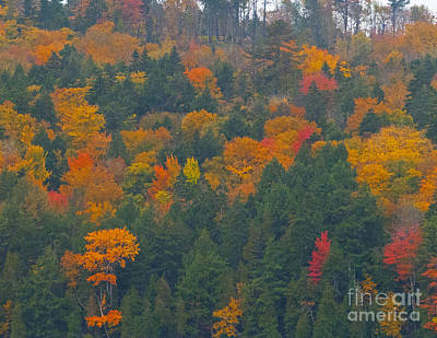 Photograph - Imprssions Of Autumn by Charles  Ridgway