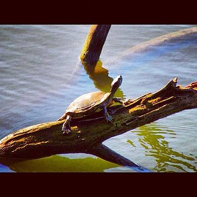 Reptiles Wall Art - Photograph - In A Corner Of The Arkansas River by Roger Snook