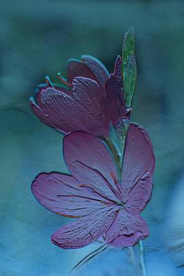 Photograph - In Aqua Dreams by Barbara  White