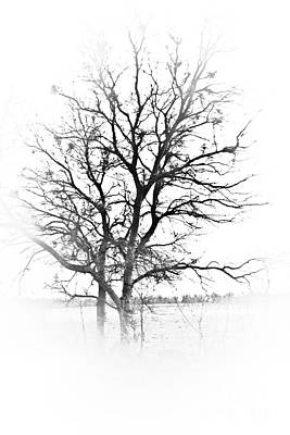 Photograph - In Black And White by Kim Henderson