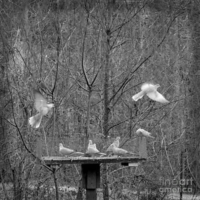 Photograph - In Coming Taking Off by Donna Brown