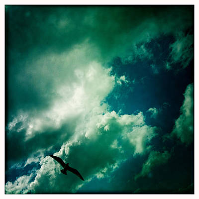 Photograph - In Flight by Betse Ellis