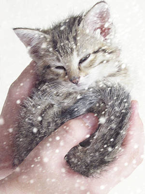 In Safe Hands II Art Print by Amy Tyler