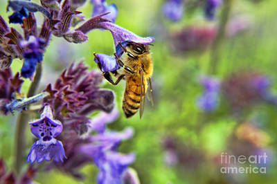 In Search Of Pollen Art Print by Craig Ebel