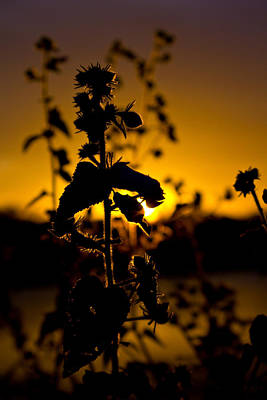Photograph - In Sunset's Glow by Mark Andrew Thomas