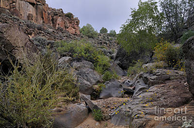 Photograph - In The Arroyo   by Ron Cline