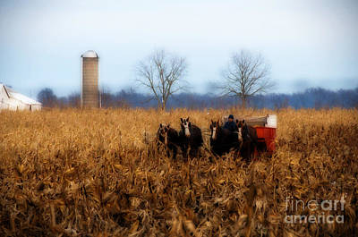 In The Corn 1 Art Print by David Arment