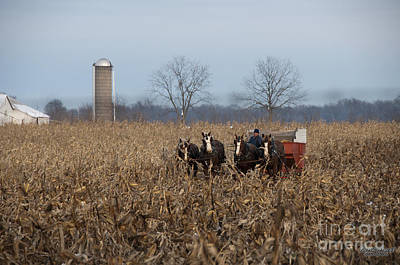 Amish Photograph - In The Corn 2 by David Arment