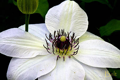 Flowers White Vine Photograph - In The Deep by Christine Belt