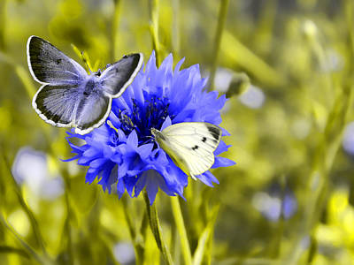 Butterflies Photograph - In The Garden by Sharon Lisa Clarke