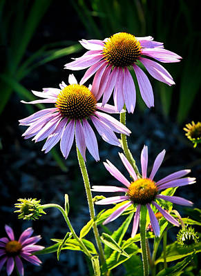 Photograph - In The Garden by Steve McKinzie