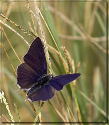 Rustenburg Photograph - In The Grass by Ronel Broderick