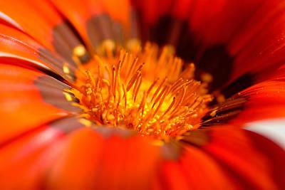 In The Heart Of Flower Art Print