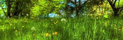 Boston Photograph - In The Meadow by Joann Vitali