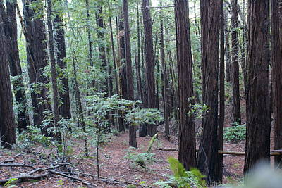 Photograph - In The Midst Of Redwood Forest Glory by Ben Upham III