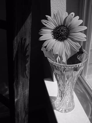Photograph - In The Window by Lynnette Johns