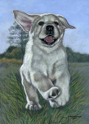 Labrador Drawing - Incoming by Debbie Stonebraker