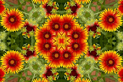 Photograph - Indian Blanket Flower Kaleidoscope by Bill Barber