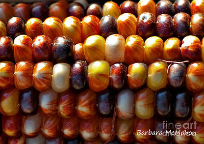 Photograph - Indian Corn by Barbara McMahon