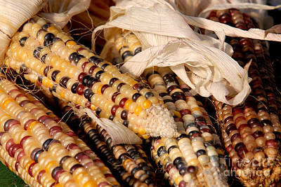 Photograph - Indian Corn by JT Lewis