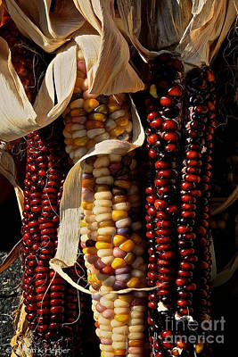 Indian Corn Art Print by Susan Herber