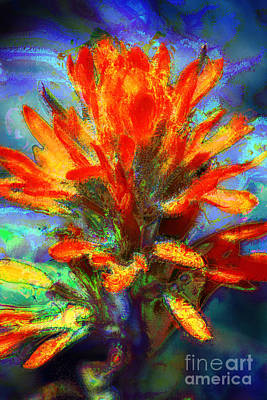 Photograph - Indian Paintbrush by Julie Lueders