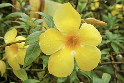 Five petal flower art page 11 of 14 pixels five petal flower wall art photograph indian yellow silks in monsoon by kantilal patel mightylinksfo