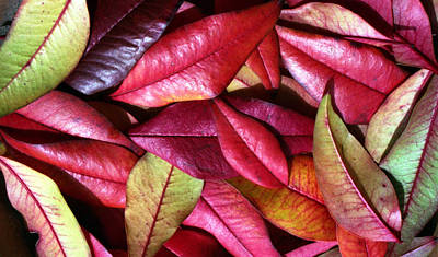 Photograph - Indiana Fall Leaves by Jennifer Bright