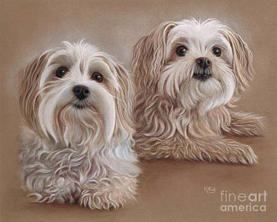 Maltese Drawing - Indra And Guy by Karen Hull