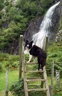Indy At Aber Falls Art Print by Michael Haslam