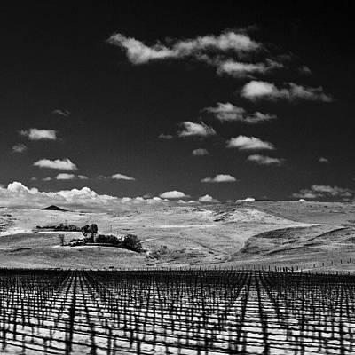 Vineyard Wall Art - Photograph - #infrared #photography #vineyard by Michael Amos