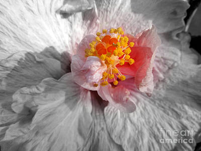Photograph - Inner Glow by Renee Trenholm