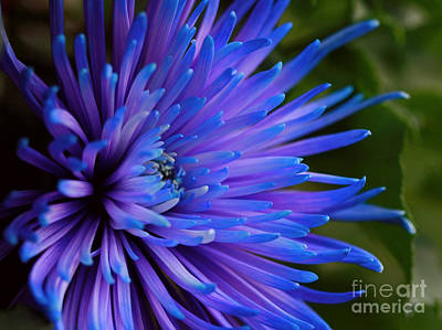 Inner Magic Art Print by Inspired Nature Photography Fine Art Photography
