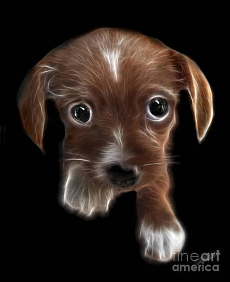 Cute Dogs Digital Art - Innocent Loving Eyes	 by Peter Piatt