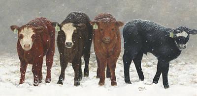 Inquisitive Calves Art Print