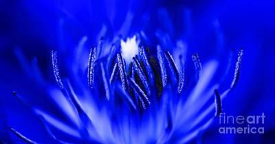Inside A Flower Art Print by Henrik Lehnerer