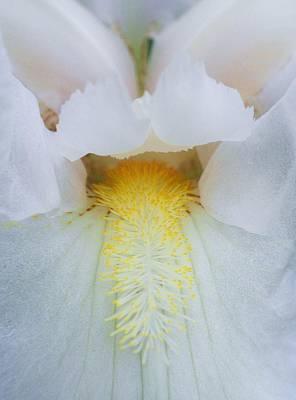 Beth Dennis Photograph - Inside Iris White by Beth Dennis