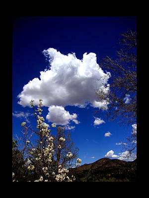 Art Print featuring the photograph Inside The Mind Of Spring by Susanne Still