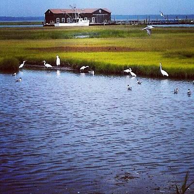 Marsh Photograph - Instagram Photo by Rich Toczynski