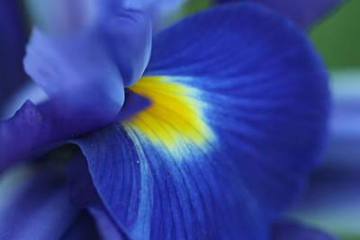Photograph - Intense Iris Bloom by Bonnie Boden