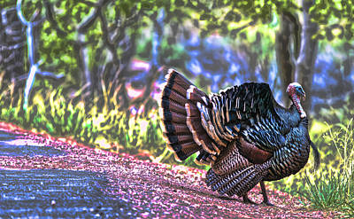 Intense Tom Turkey Display Art Print by Gregory Scott